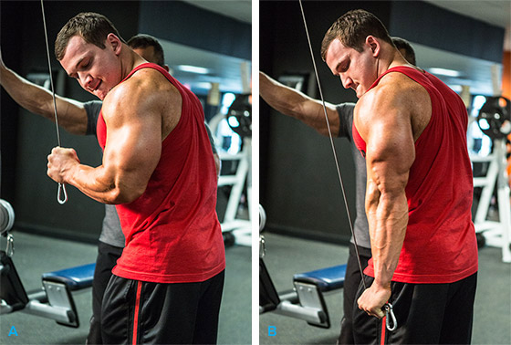 Cable Extensions Workout : Cable one arm tricep extension the stephane andre