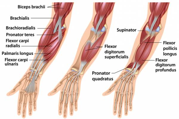 Stretching Of Forearm Muscle • THE stephane ANDRE