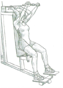 triceps extension anatomy version