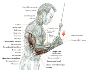 reverse pushdown anatomy