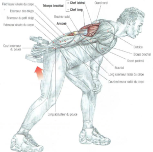 Standing BentOver One Arm Dumbbell Triceps Extension anatomy