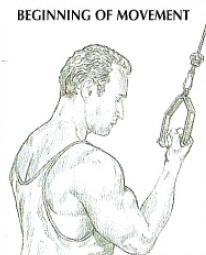 one arm reverse pushdowns anatomy