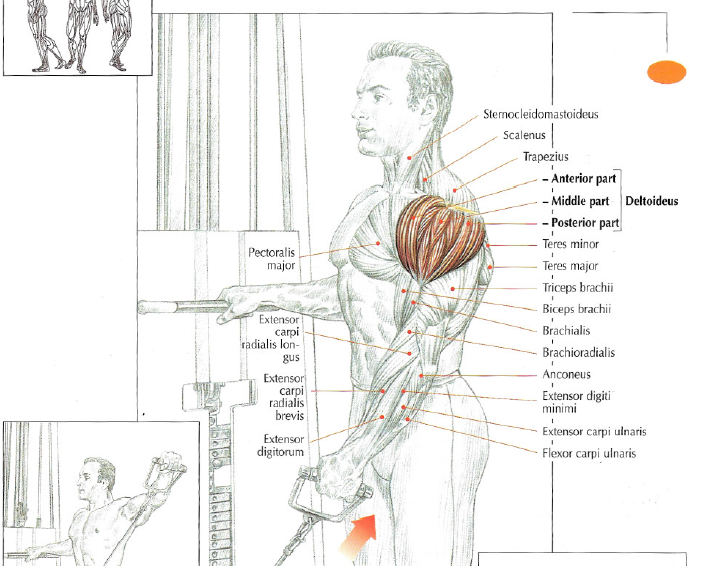 Low Pulley Lateral Raises The Stephane Andre
