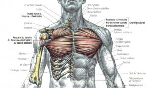 rupture of pectoralis major