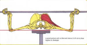 bench press morphology