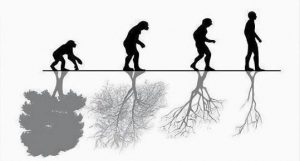 evolution human being nature tree