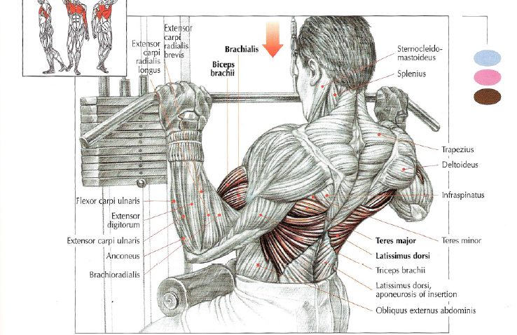 Lat Pulldowns • THE stephane ANDRE