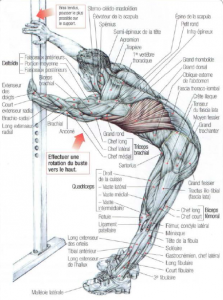 stretching latissimus dorsi teres major