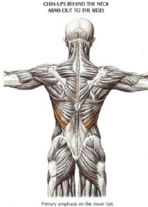 chin up anatomy back
