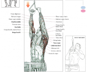 close grip lat pulldowns