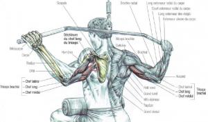 triceps tear lat pulldowns
