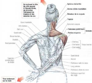 deltoid trapezius neck stretching