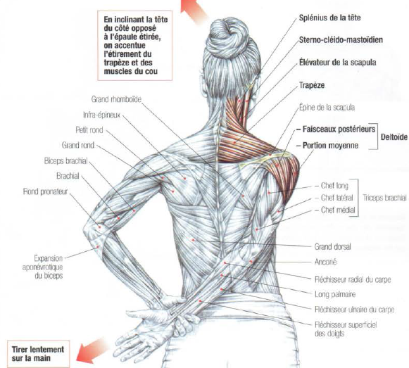 Deltoid And Trapezius And Neck Stretching • THE stephane ANDRE