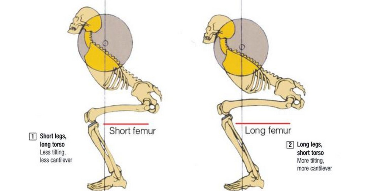 How To Do Squat The Stephane Andre