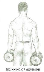 dumbbell shrugs back anatomy