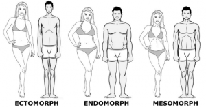 morphology endomorph ectomorph mesomorph