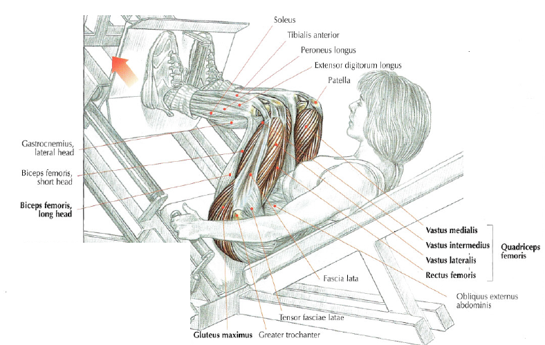 Angled Leg Press • THE stephane ANDRE