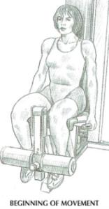 leg extension anatomy