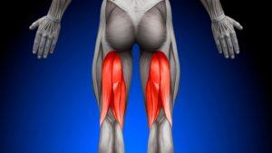 hamstring muscle anatomy tear