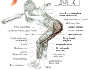 good morning leg exercise