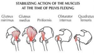 good morning leg exercise pelvis stabilization