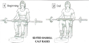 seated barbell calf raises