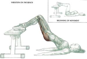 bench bridge anatomy
