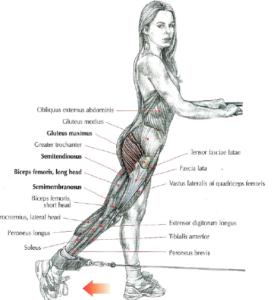 cable back kicks glutes anatomy