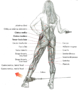 Cable Hip Abductions anatomy