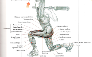 lunges barbell
