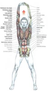stretching upper body