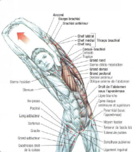 stretching upper body lateral