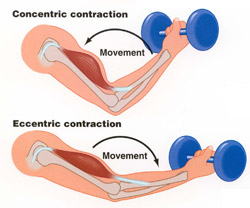 concentric eccentric contraction