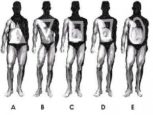 x-shape physique