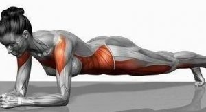 plank muscle