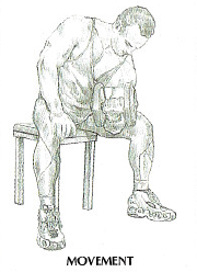 dumbbell concentration curls anatomy