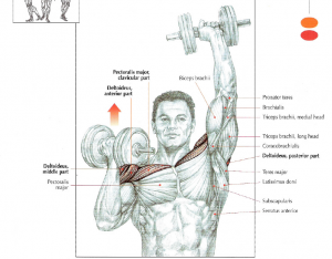 one arm dumbbell press