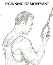 one arm reverse pushdowns anatomy
