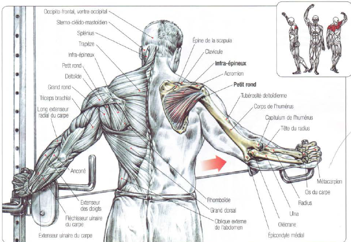 One Arm Rear Deltoid Fly With Cable