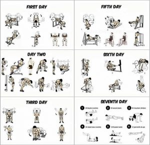 gym training program