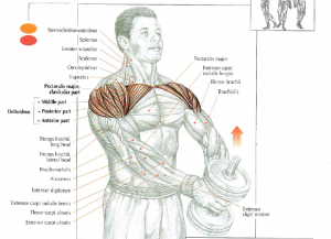 One Dumbbell Front Raises