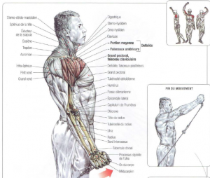 semi pronated low pulley front raises
