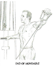 low pulley lateral raises anatomy shoulder