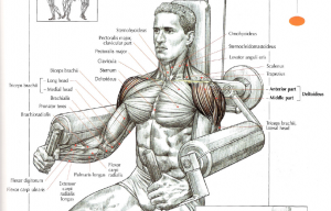 machine lateral raises