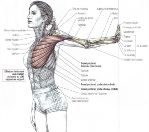 stretching pectoralis major muscle chest