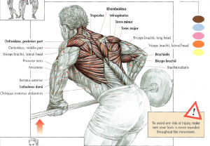 barbell bent rows