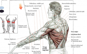 straight arm lat pulldowns