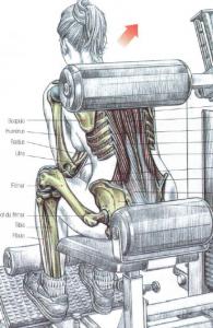 machine back extension