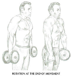 dumbbell shrugs rotaion
