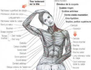 stretching trapezius neck